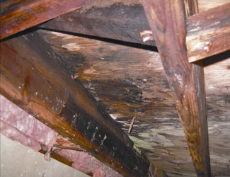 mold and rot in a Aspen crawl space