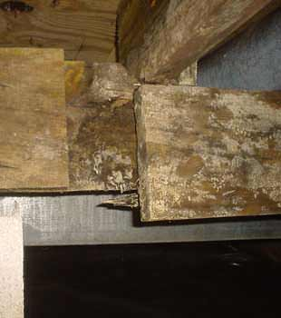 Extensive basement rot found