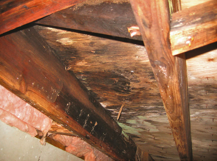 Mold Damage Amp Crawl Spaces How Mold Affects Colorado Homes