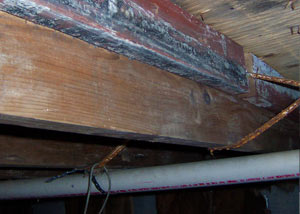 Rotting, decaying wood from mold damage in Granby